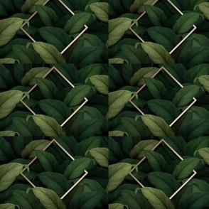 tropical-foliage-background