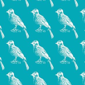 turquoise little bird