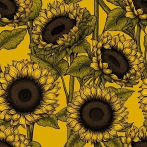 Sunflower field 5