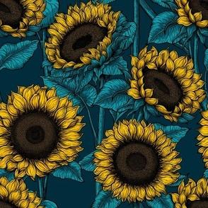 Sunflower field 6