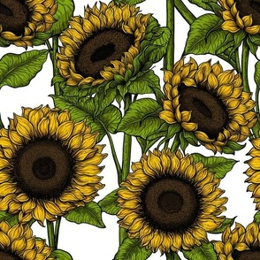 Sunflower field 8