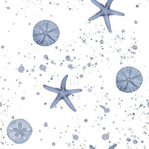 Blue Beach Seashells