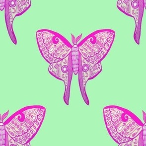 Luna moth butterfly illustration pink ombre pattern