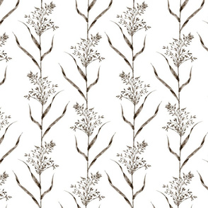American milletgrass brown // medium scale
