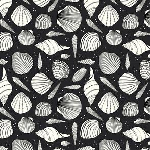 Pass-a-grille beach shells