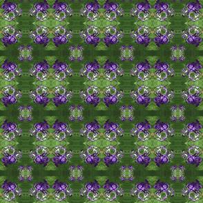 purple-white-iris_manipulated