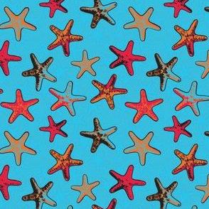Starfish in the Sand red Design medium