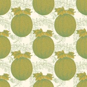Cantaloupe fields