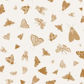 Cinnamon Brown Moths