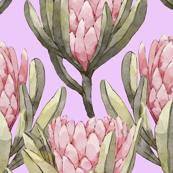 Protea Garden - Lavender