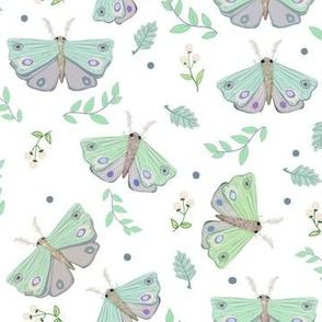 Fun Moths Gathering