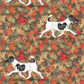 Smooth Fox Terrier in Autumn Leaves