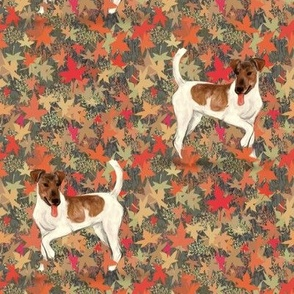 Brown and White Smooth Fox Terrier in Autumn Leaves