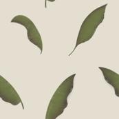 Mango Palm Leaves