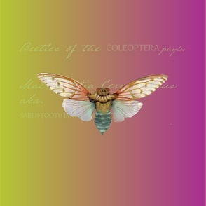 Vintage-Insect_Gradient Cicaida