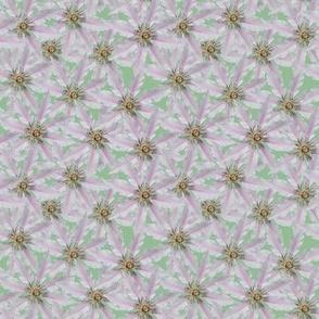 White Clematis in Lichen Green