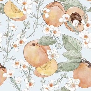 Hand Drawn Apricots on Pale Ble