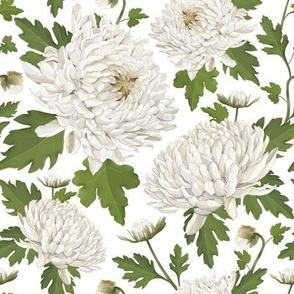 Watercolour Chrysanthemums White