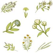 Wild Herbal Flowers