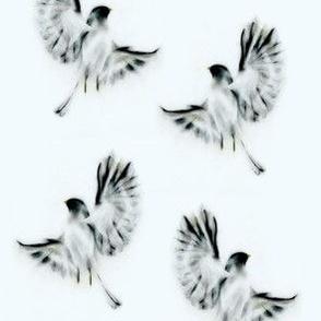 Proud Bird on Blueish White Background
