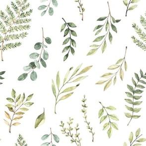 eucalyptus and Greenery