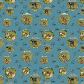 CATS round blue bg