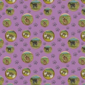 CATS round purple bg