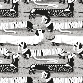 Normal scale // Spooktacular long dachshunds // light grey background mummy ghost and skeleton dogs