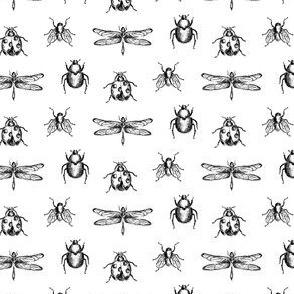 Vintage Bug Illustrations in Black and White