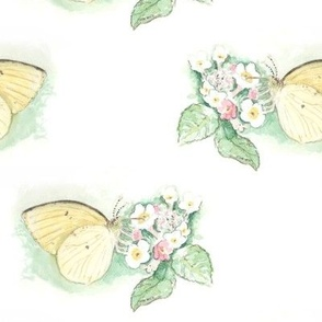 Watercolor Sulphur Butterfly on White