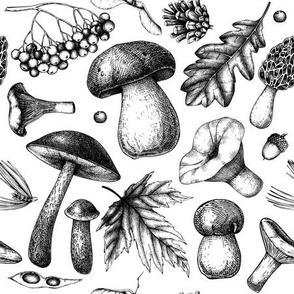 Autumn leafes and mushrooms