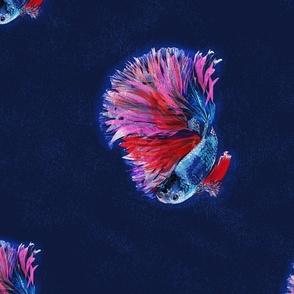 beta fish _ big scale