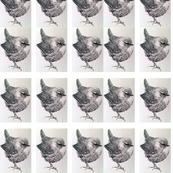 9a miniature repeating wren copy