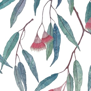 eucalyptus with pink flowers on white