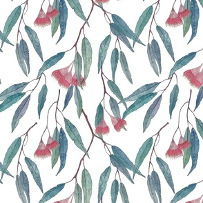 eucalyptus with pink flowers on white /scale/
