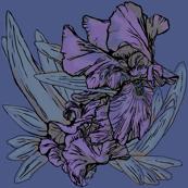 Iris B Blue
