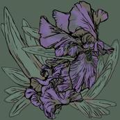 Iris B Green