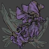Iris B Grey75