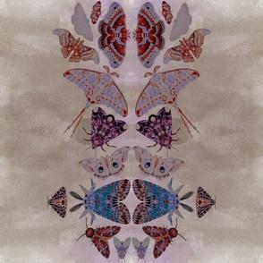 Silver Moth Garden