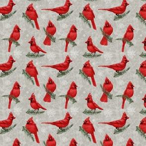 Northern Cardinals Gray
