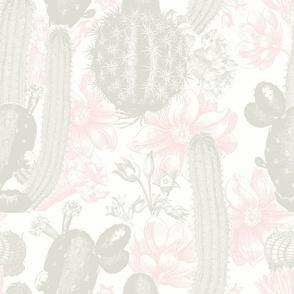 Cactus Flower in Pink