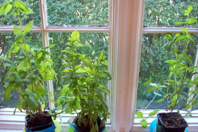Why Growing Windowsill Herbs Will Change Your Life