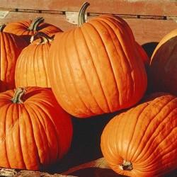 7 Reasons Why You Should Eat More Pumpkin