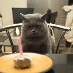 5 Alternatives to Birthday Cake