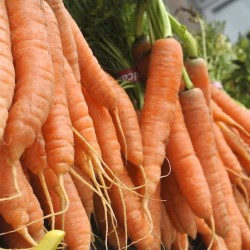5 Santa Clara Farmer's Market Finds That Are Worth Waking Up Early For