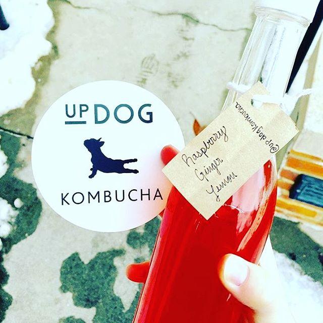 updog kombucha