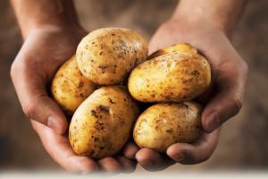 Courtesy of potatoes.com