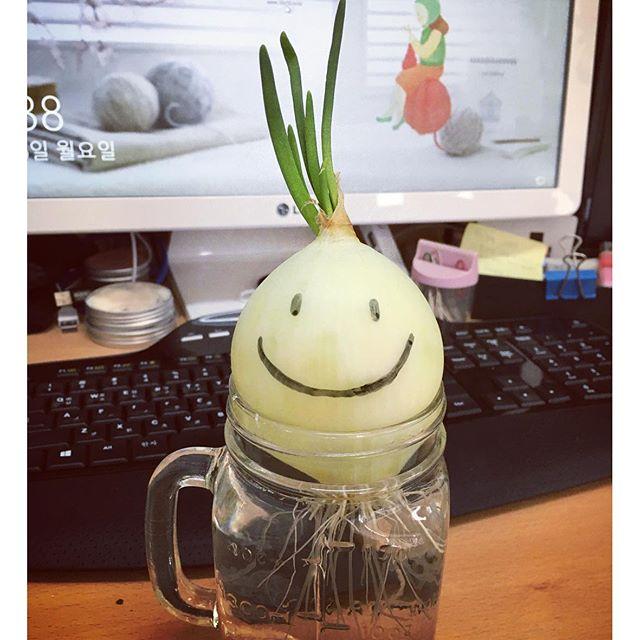 Pet onion