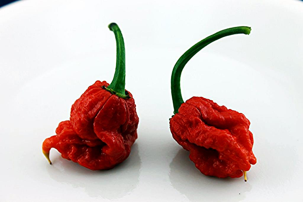 photo courtesy of The Hot Pepper