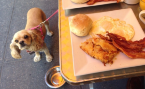 The 9 Best NYC Restaurants To Go To With Your Dog